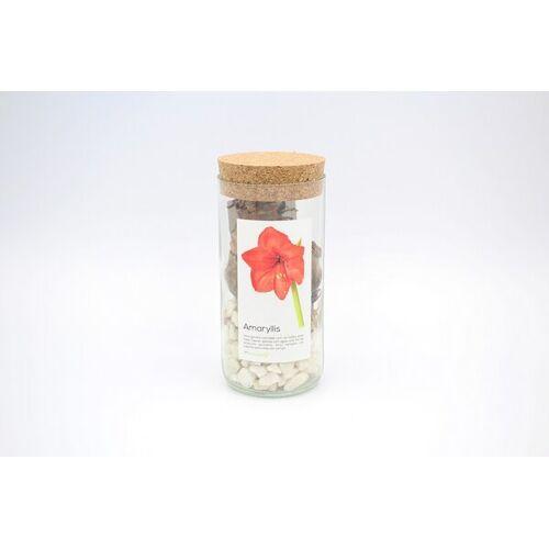 Life in a bag Amaryllis Pflanze Im Glas weiß