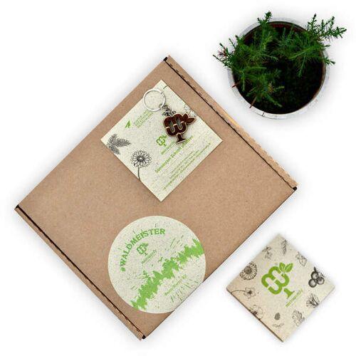 meinwoody #Waldmeister-starter Kit (3er Baum-pflanzset)