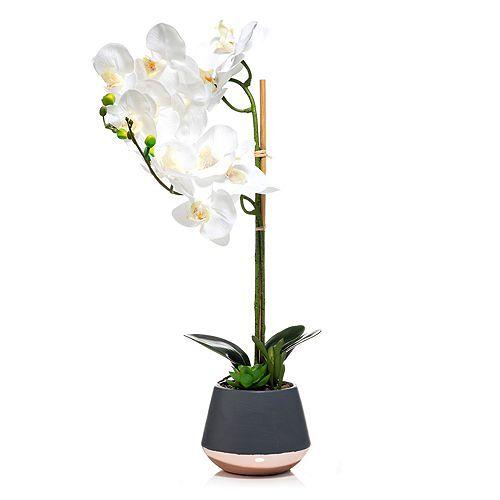 ABELLA Flora künstliche Orchidee Keramiktopf Höhe ca. 60cm