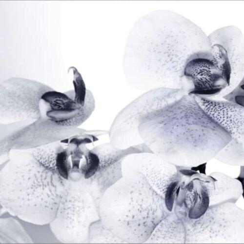 AG Design Fototapete Orchids