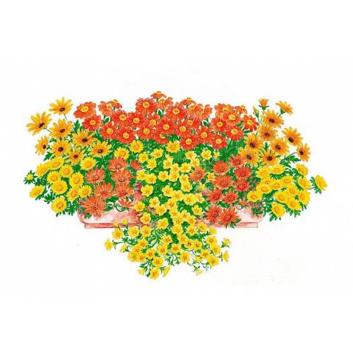 BCM Beetpflanze »Sonnige Farben« Set, 18 Pflanzen mit Erde