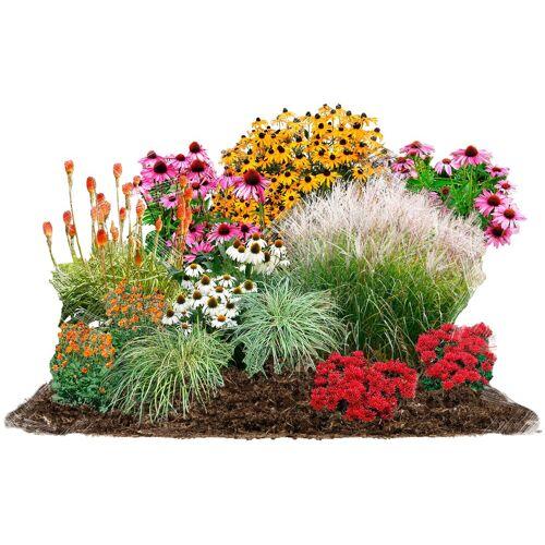 BCM Beetpflanze »Sommerliebe« Set, 24 Pflanzen
