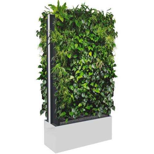 C+P Mobile Pflanzenwand für beidseitige Bepflanzung, b100xt40xh198cm