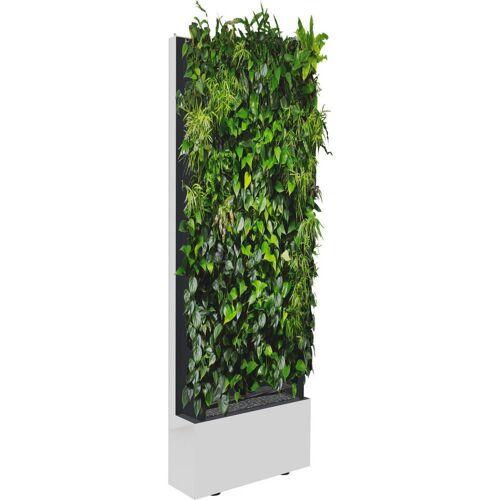 C+P Pflanzenwand auf Füßen, mit Trays für einseitige Bepflanzung, b80xt40xh232cm