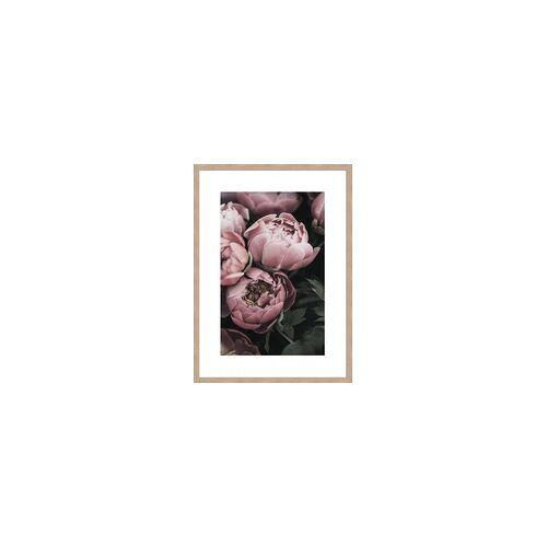 Gerahmtes-Bild PFINGSTROSEN (LB 51x71 cm)