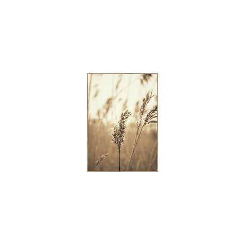 Poster REED 3(BH 50x70 cm)