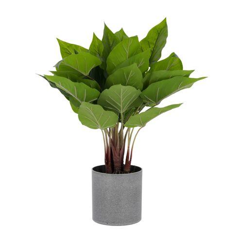Kave Home - Anthurium kunstpflanze 50 cm
