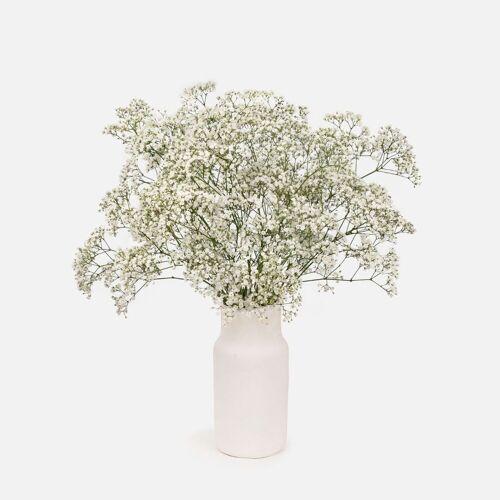 Colvin Blumen Verschicken - Blumenstrauß aus Paniculata Blumenstrauß - WHITE CARESS - Colvin