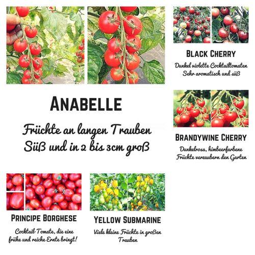 Pepperworld Bio Saat Sortiment Kirschtomate- 5 extrem leckere Tomatensorten für einen traumhaften Salatgenuss