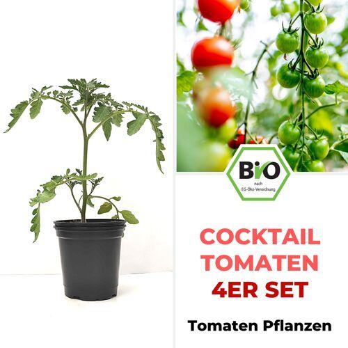 Pepperworld Cocktail Tomaten 4er Set - BIO Tomatenpflanzen