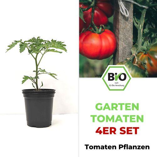 Pepperworld Garten Tomaten Set - BIO Tomatenpflanzen