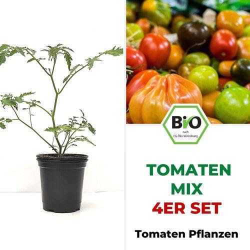Pepperworld BIO Tomatenpflanzen 4er Mix Paket