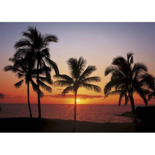 Komar Hawaii Fototapete 368x254cm