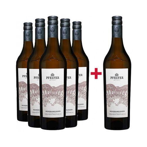 Weingut Pfeifer Pfeifer Daniel 2020 5+1 Sämling Paket