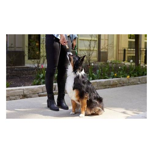 Wau Wow Onlinehundeschule Online-Kurs Hundeschule und Training von Wau Wow Onlinehundeschule (70% sparen*)