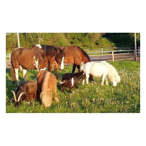 Gnadenhof Wattenscheid Kuschelstunde mit einem Pony für 1 oder 2 Personen im Gnadenhof Wattenscheid (bis zu 40% sparen*)