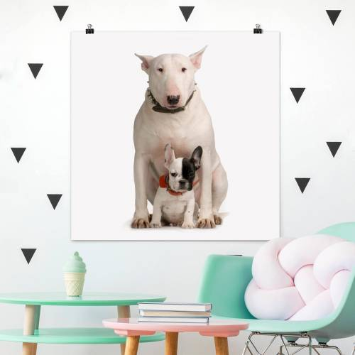 Poster Bull Terrier and friend