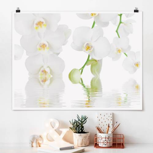 Poster Wellness Orchidee - Weiße Orchidee