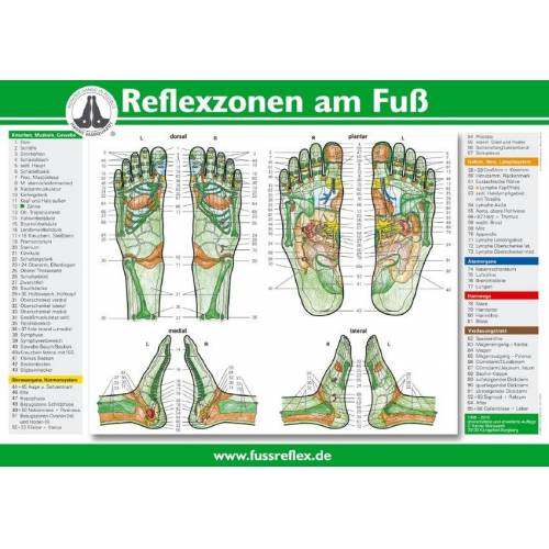 Karl Haug Reflexzonen der Füße (Tafel A2)