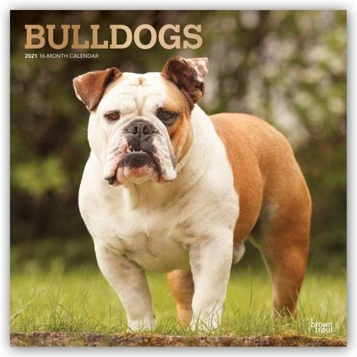 Browntrout Verlags GmbH Bulldogs - Bulldoggen 2021 - 18-Monatskalender mit freier DogDays-App