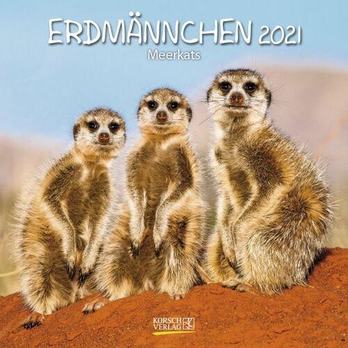 Korsch Verlag GmbH Erdmännchen 2021
