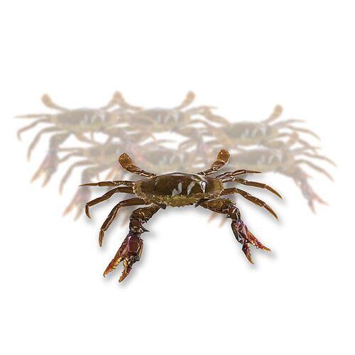 Soft Shell Mangroven Krabben,  Paitoon, TK, 1 kg, 14 St