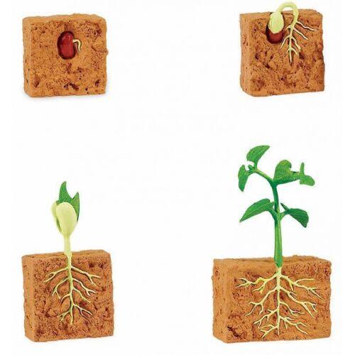 Safari spielset Lebenszyklus Bohnenpflanze junior 4 teilig
