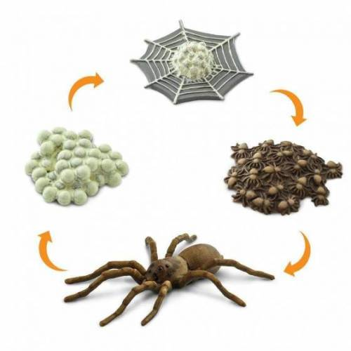 Safari charaktere Lebenszyklus eines Spin junior 4 teilig