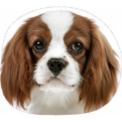 Starbright kissen 3D Hund 35 cm Baumwolle