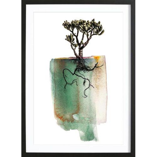 """JUNIQE Bild Blätter & Pflanzen """"Crassula"""" von JUNIQE - Künstler: Shot by Clint"""