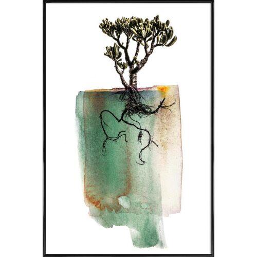 """JUNIQE Kunstdruck Blätter & Pflanzen """"Crassula"""" von JUNIQE - Künstler: Shot by Clint"""