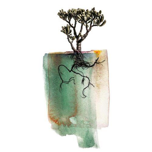"""JUNIQE Glasbild Blätter & Pflanzen """"Crassula"""" von JUNIQE - Künstler: Shot by Clint"""