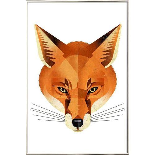 """JUNIQE Poster im Alurahmen Füchse """"Fuchs"""" von JUNIQE - Künstler: Dieter Braun"""