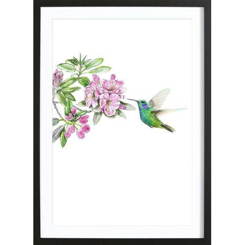 """JUNIQE Bild Kolibris """"Kolibri"""" von JUNIQE - Künstler: Janine Sommer"""