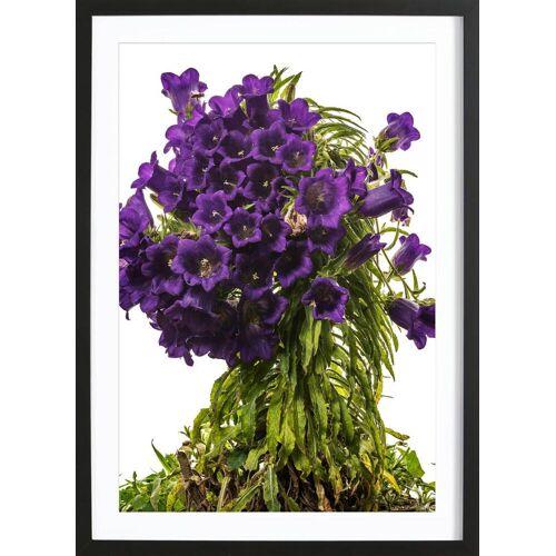 """JUNIQE Bild Blumen """"Flora - Glockenblume"""" von JUNIQE - Künstler: Tan Kadam"""