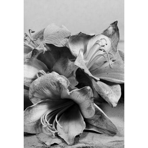 """JUNIQE Glasbild Lilien """"Staub - Lilien weiß"""" von JUNIQE - Künstler: Tan Kadam"""