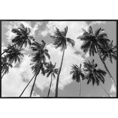 "JUNIQE Kunstdruck Palmen ""Kokospalmen"" von JUNIQE - Künstler: Tan Kadam"