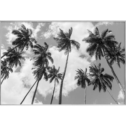 "JUNIQE Poster im Alurahmen Palmen ""Kokospalmen"" von JUNIQE - Künstler: Tan Kadam"