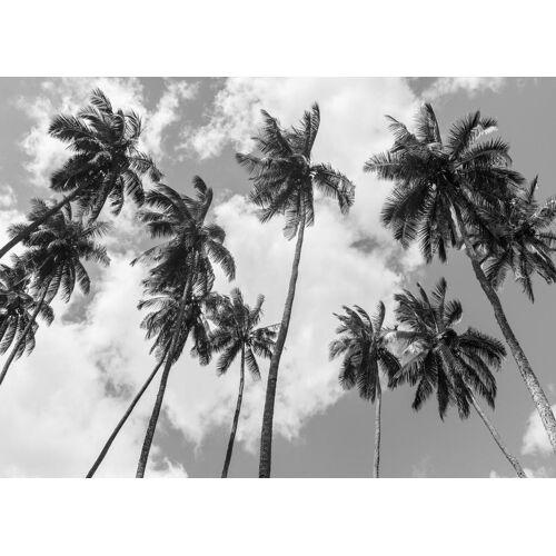 """JUNIQE Leinwandbild Palmen """"Kokospalmen"""" von JUNIQE - Künstler: Tan Kadam"""