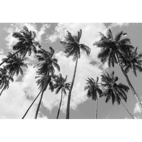 "JUNIQE Alu-Dibond bilder Palmen ""Kokospalmen"" von JUNIQE - Künstler: Tan Kadam"