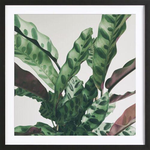 """JUNIQE Bild Blätter & Pflanzen """"Pattern"""" von JUNIQE - Künstler: Cassia Beck"""