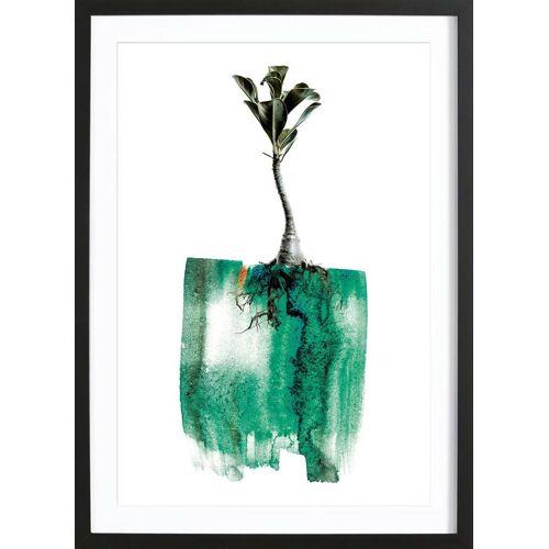 """JUNIQE Bild Blätter & Pflanzen """"Adenium"""" von JUNIQE - Künstler: Shot by Clint"""