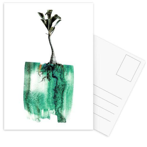 """JUNIQE Postkarten Blätter & Pflanzen """"Adenium"""" von JUNIQE - Karten Kunst"""