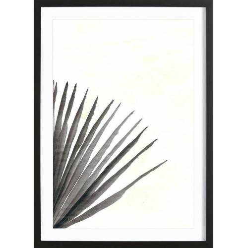 """JUNIQE Bild Palmen """"Palm V"""" von JUNIQE - Künstler: Kristen Polsinelli"""