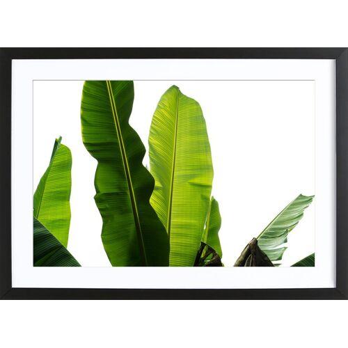 "JUNIQE Bild Blätter & Pflanzen ""Bananenblätter"" von JUNIQE - Künstler: Tan Kadam"