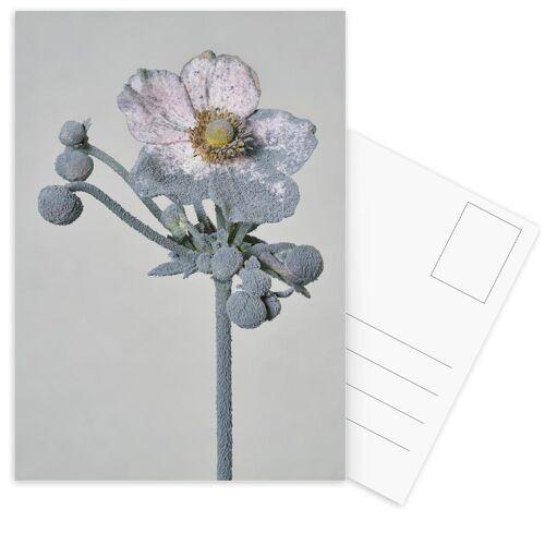 """JUNIQE Postkarten Blumen """"Staub - Japanische Anemone"""" von JUNIQE - Karten Kunst"""