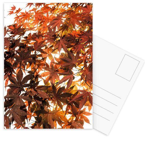 """JUNIQE Postkarten Blumen """"Flora - Japanischer Ahorn"""" von JUNIQE - Karten Kunst"""