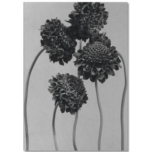 """JUNIQE Notizblock Blumen """"Staub - Schokoladenblume"""" von JUNIQE"""