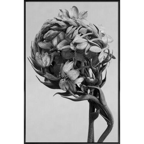 """JUNIQE Poster Blätter & Pflanzen """"Staub - Milchstern"""" von JUNIQE - Künstler: Tan Kadam"""