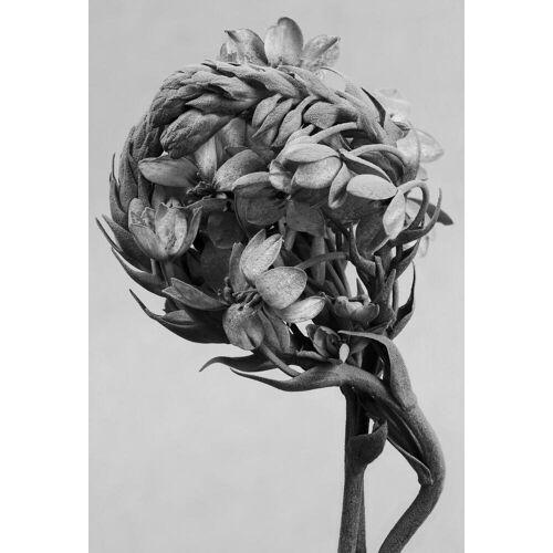 """JUNIQE Glasbild Blätter & Pflanzen """"Staub - Milchstern"""" von JUNIQE - Künstler: Tan Kadam"""